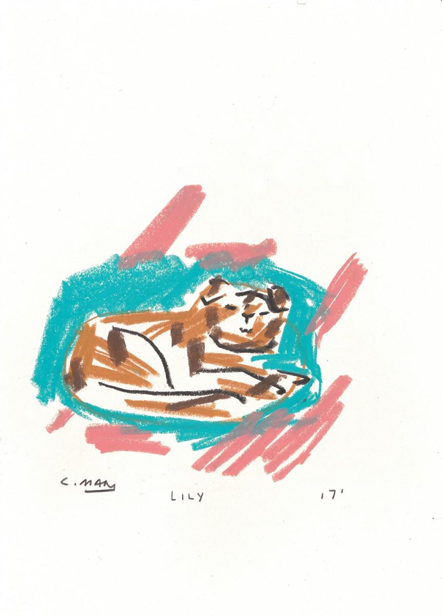 lily-229a160430f0a3d18c1fda4ff1251c28
